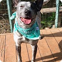 Adopt A Pet :: Veronica - Santa Ana, CA