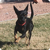 Adopt A Pet :: Ethel - Henderson, NV