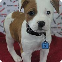 Adopt A Pet :: SASSI - Gustine, CA