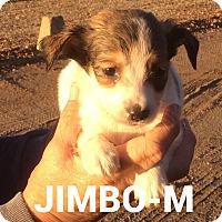 Adopt A Pet :: Jimbo - Trenton, NJ