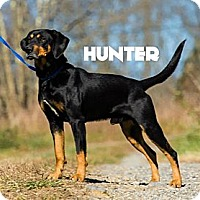 Adopt A Pet :: Hunter - Chilhowie, VA