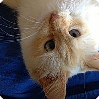 Adopt A Pet :: Miranda - Jeffersonville, IN