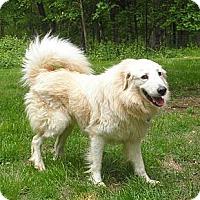 Adopt A Pet :: Gabriel - Lyme, CT