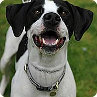 Adopt A Pet :: Suzie Q - Tinton Falls, NJ
