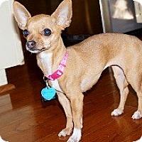 Adopt A Pet :: FOXY SOX - AUSTIN, TX