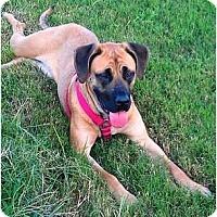 Adopt A Pet :: Cabela - Asheboro, NC