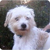 Adopt A Pet :: Champ - Duluth, GA