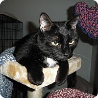 Adopt A Pet :: Kitano - Milwaukee, WI