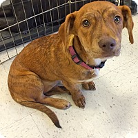 Adopt A Pet :: Betty in CT - Manchester, CT