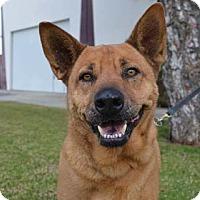 Adopt A Pet :: Kobe - Irvine, CA