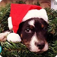 Adopt A Pet :: Heath - Kimberton, PA