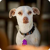 Adopt A Pet :: Jackson - Sunnyvale, CA