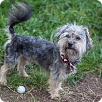 Adopt A Pet :: Brett - Houston, TX