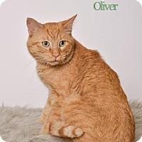 Adopt A Pet :: Oliver - West Des Moines, IA