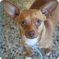 Adopt A Pet :: Paco - Cranston, RI