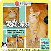 Adopt A Pet :: Webster - Arlington/Ft Worth, TX