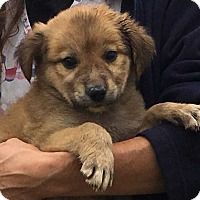Adopt A Pet :: Kora (7 lb) Video! - SUSSEX, NJ
