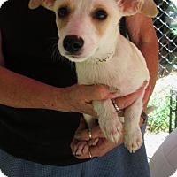 Adopt A Pet :: PETUNIA - Lincolndale, NY