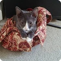 Adopt A Pet :: Mango - Locust, NC