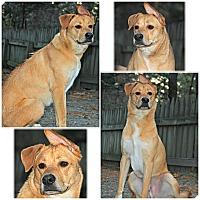 Adopt A Pet :: Oliver - Forked River, NJ