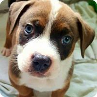 Adopt A Pet :: Hank - Los Banos, CA