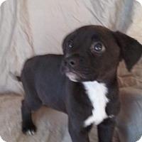 Adopt A Pet :: Vixen - Custer, WA