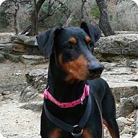 Adopt A Pet :: Evie - Helotes, TX