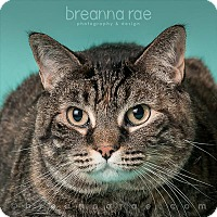 Adopt A Pet :: Callie - Sheboygan, WI