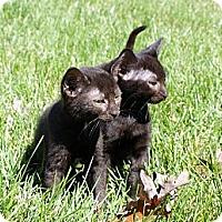 Adopt A Pet :: Mocca & Java - Barnegat, NJ