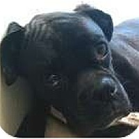 Adopt A Pet :: Jax - Sunderland, MA