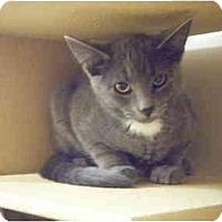 Adopt A Pet :: Yoyo - Brea, CA