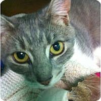 Adopt A Pet :: Gineen - Secaucus, NJ