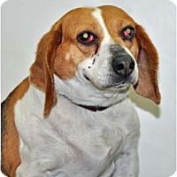 Adopt A Pet :: Nora - Port Washington, NY