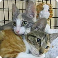Adopt A Pet :: Caroline & Kennedy - Deerfield Beach, FL