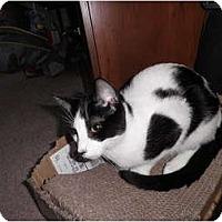 Adopt A Pet :: Gavin - Warren, MI