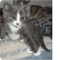 Adopt A Pet :: Fuzzie - Acme, PA