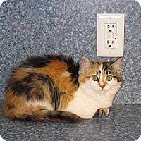 Adopt A Pet :: Precious - Harrisburg, NC