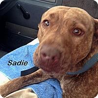 Adopt A Pet :: Sadie - Chatham, VA
