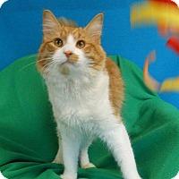 Adopt A Pet :: Caleb - East Hanover, NJ