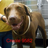 Adopt A Pet :: Creole - baltimore, MD