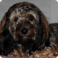 Adopt A Pet :: Bentley - Abilene, TX