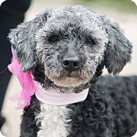 Adopt A Pet :: Violet - Kingwood, TX
