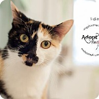 Adopt A Pet :: Edie - Lakewood, CO