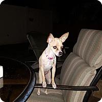 Adopt A Pet :: Kammy - Lacey, WA