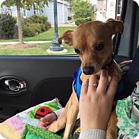 Adopt A Pet :: Jake - Warsaw, IN