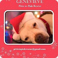 Adopt A Pet :: Genevieve - nashville, TN