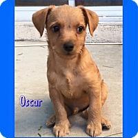 Adopt A Pet :: Oscar - Las Vegas, NV