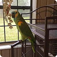 Adopt A Pet :: Nelly - Tampa, FL