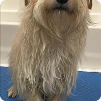 Adopt A Pet :: Skippy - Thousand Oaks, CA