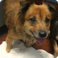 Adopt A Pet :: Bessie - Oak Ridge, NJ